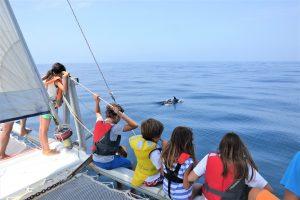 Kinder sichten Delfine vor der Algarve-Küste