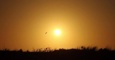 Waldbrände in Portugal wirken sich bis Algarve aus