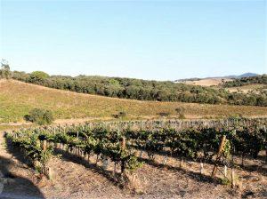 Bio-Wein wird im Alentejo auch in Estremoz angebaut