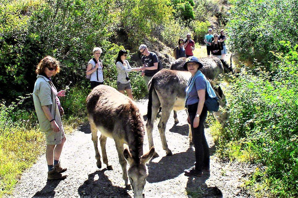 Eselwanderungen an der Algarve zu jeder Jahreszeit ein Naturerlebnis