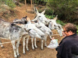 Eselwanderungen an der Algarve im Monchique-Gebirge