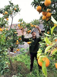 Eselwanderungen an der Algarve vom Orangenhain am Picota aus