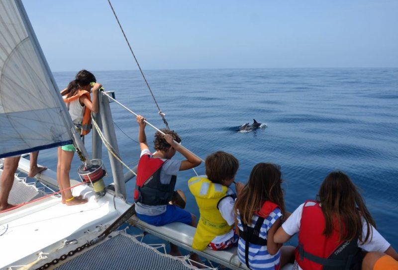Familienurlaub an der Algarve bedeutet Delfine und Wale zu beobachten