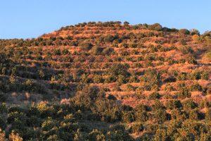 Reisewetter Algarve zur Orangenernte im Januaran Portugals Südküste