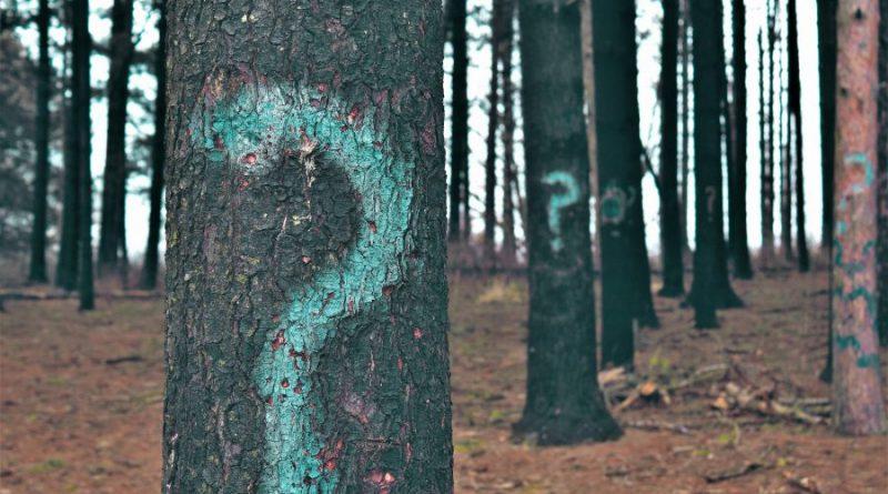 Brandschutz in Portugal 2018 führt zum Fällen vieler Bäume