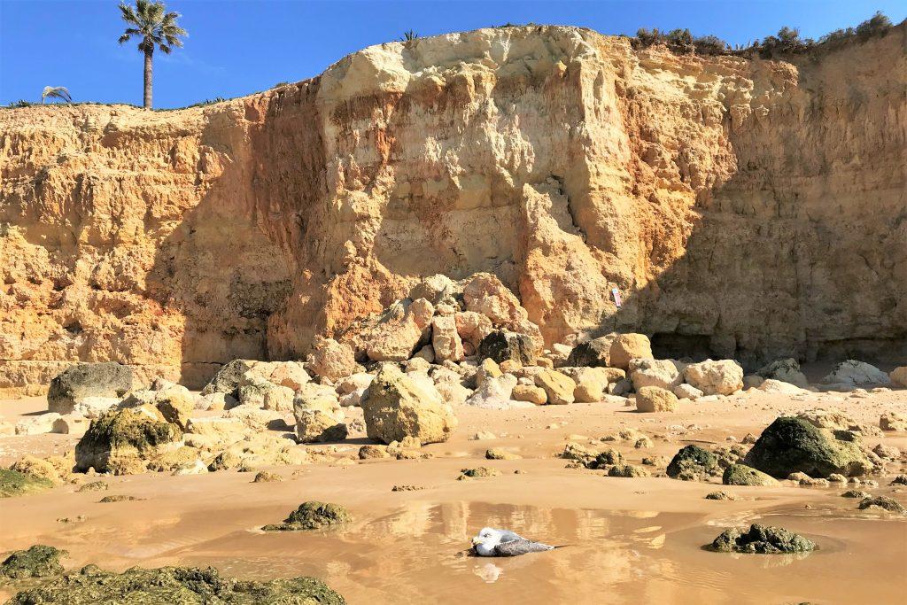 Algarve News über Klippenabbruch an der Südküste Portugals