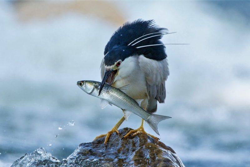 Im April bietet die Algarve-Naturwoche unter anderem auch Vogelbeobachtung an