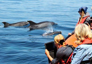 Wale und Delfine an der Algarve auf Bootstouren beobachten