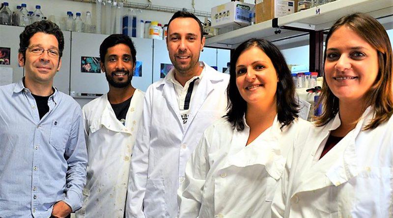 Algarve-Forscher um Prof. Rui Martinho identifizierten ein wichtiges Protein für die Fortpflanzung