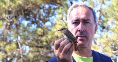 Vogelbeobachter in Sagres an der Algarve bei der Beringung