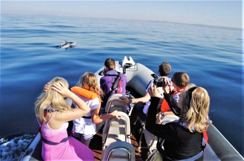 Orcas und andere Wale und Delfine an der Algarve per Boot beobachten