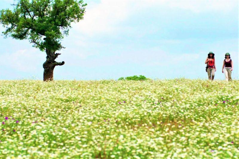 Algarve-Video wirbt für fruchtbare und intakte Natur im Südwesten Portugals