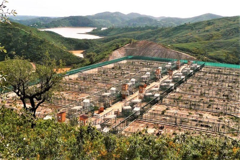 Iberischer Luchs lebt in Aufzuchtstation an der Algarve in Silves