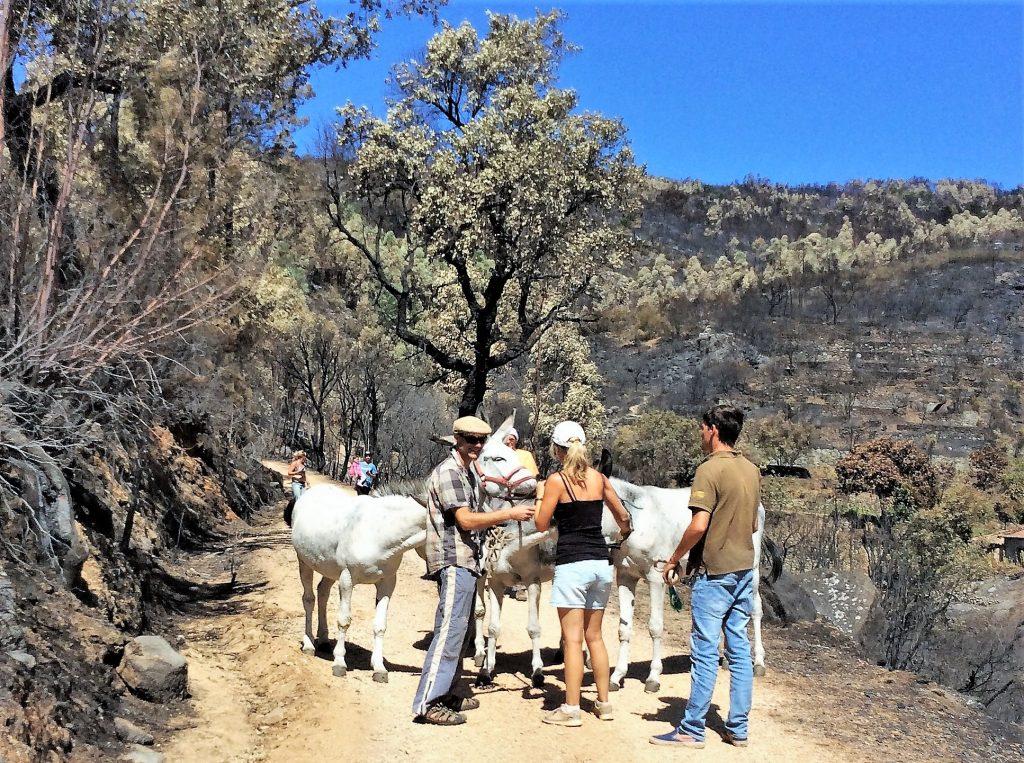 Rettung aus durch Waldbrände verkohlter Vegetation bei Monchique an der Algarve