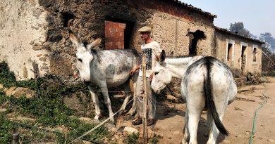Robert Nestmann ist Esel-Flüsterer aus Monchique an der Algarve