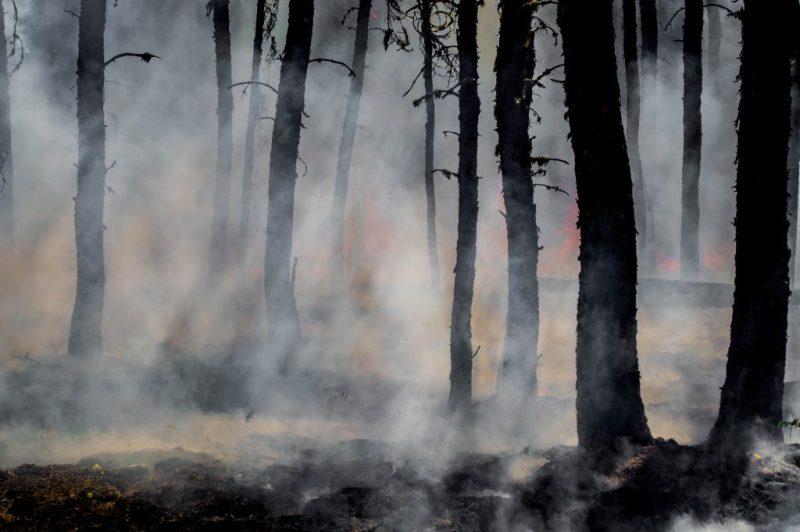 Events wie Waldbrände überstrahlen das Natur-Image der Algarve