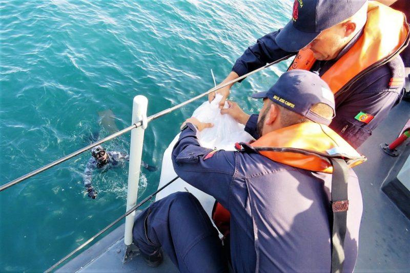 Algarve News zum Aussetzen von Fischen im Atlantik vor der Algarve-Küste von Sagres