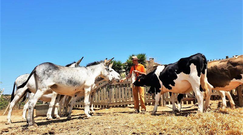Robert Nestmann füttert Esel und Kühe auf dem Bio-Hof bei Lagos
