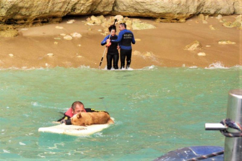 Algarve News über geretteten Hund am Strand von Caneiros